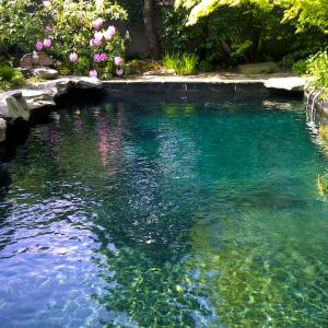 backyard-oasis